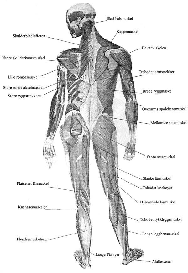 navn på muskler i kroppen norsk pussy